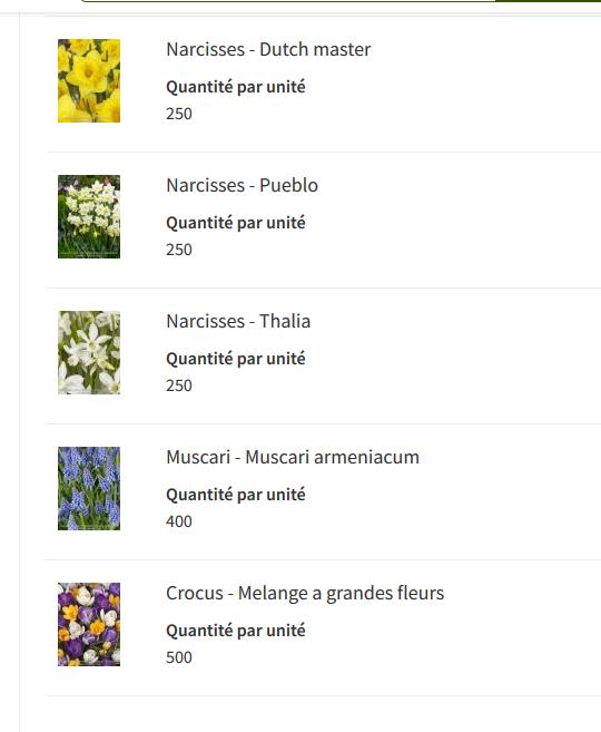 les-bulbes-plantes